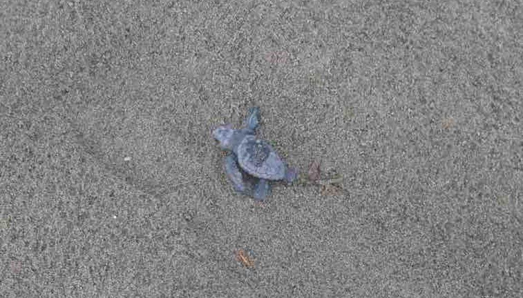 tartaruga 2[1] copia