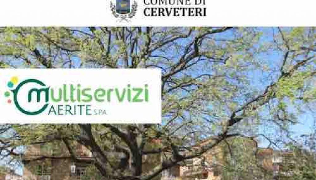censimento arboreo
